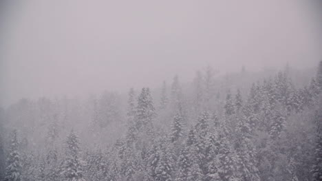 Snowflakes-Against-Snow-Covered-Trees-In-Mountains