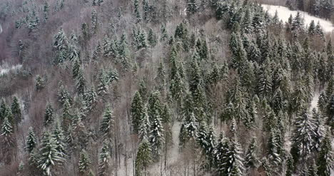 Aerial-View-Of-Forest-Covered-With-Snow-In-Mountains-1