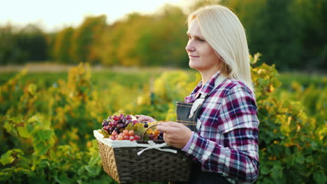 Woman-Farmer-With-A-Basket-Of-Grapes-Goes-Along-The-Vine-Steadicam-Shot