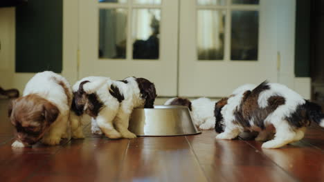 A-Group-Of-Fun-Puppies-Eats-From-A-Metal-Bowl-Running-Joyfully-And-Rubbing-Around-Themselves