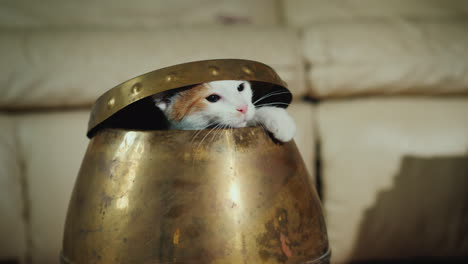 Funny-Cat-Will-Climb-Out-Of-The-Jug