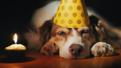 Portrait-Of-A-Cute-Birthday-Dog-In-A-Cap-Near-Balloons