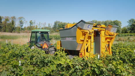 Workers-Go-For-A-Machine-That-Picks-Grapes-From-A-Vine