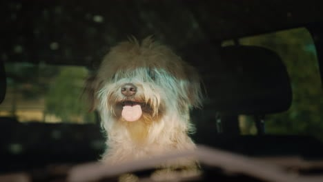 Dog-Waits-For-Owner-In-Car