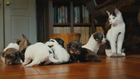 Tricky-Cat-Watches-As-Little-Puppies-Play