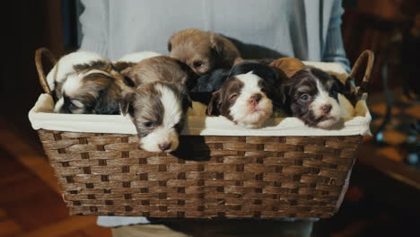 Portrait-Of-A-Woman-With-A-Basket-Full-Of-Little-Puppies