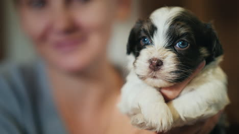 Woman-Holding-A-Cute-Puppy-In-A-Brown-White-Color