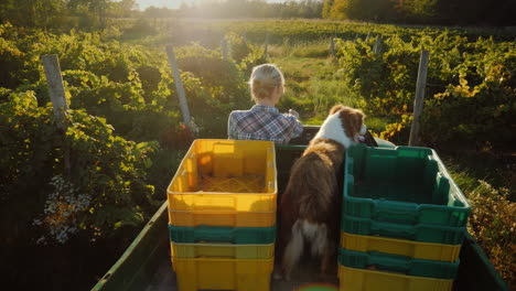 A-Farmer-On-A-Mini-Tractor-Rides-Through-The-Field-In-The-Back-Of-His-Faithful-Dog-Rural-Life-Concep