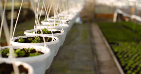 Potted-Plants-On-Table-In-Greenhouse-2