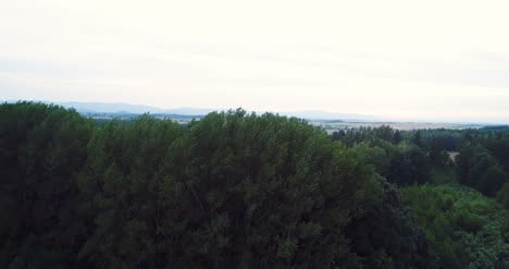 Flying-Over-The-Beautiful-Forest-Trees-Landscape-Panorama-2