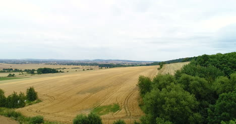 Aerial-Shoot-Of-Wheat-Fields-1