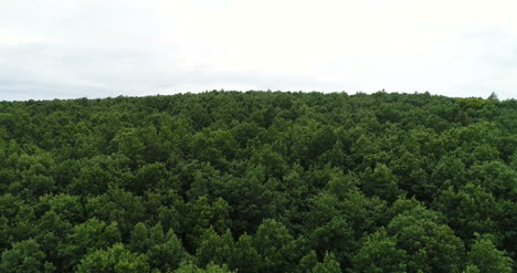 Flying-Over-The-Beautiful-Forest-Trees-Landscape-Panorama-3