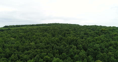 Flying-Over-The-Beautiful-Forest-Trees-Landscape-Panorama-4