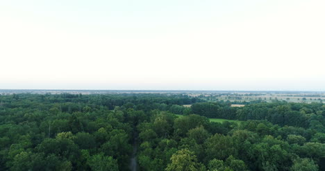Flying-Over-Forest-Trees-Nature-Aerial-Views-1