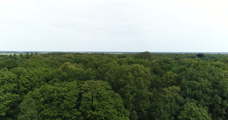 Flying-Over-Forest-Trees-Nature-Aerial-Views-2