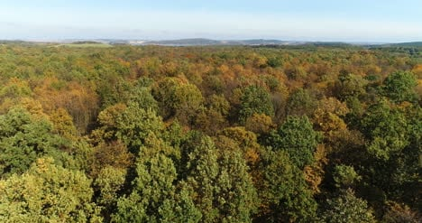 Flying-Over-Forest-Trees-Nature-Aerial-Views-6