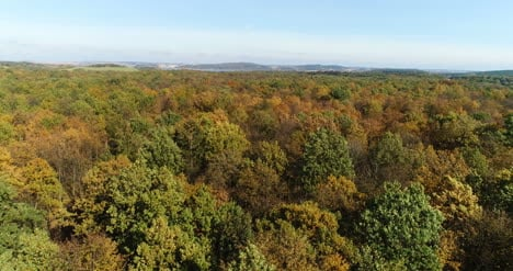 Flying-Over-Forest-Trees-Nature-Aerial-Views-7