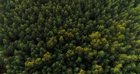 Aerial-View-Of-Forest-Woods
