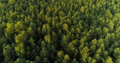 Aerial-View-Of-Forest-Woods-1