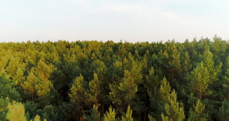 Aerial-View-Of-Forest-Woods-2