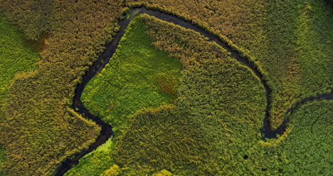 Aerial-View-Of-Forest-Woods-3