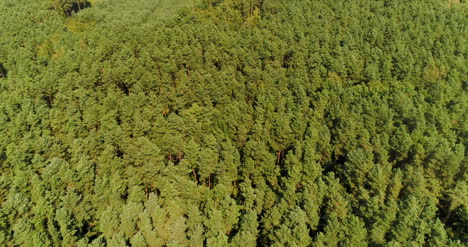 Aerial-View-Of-Forest-Woods-5