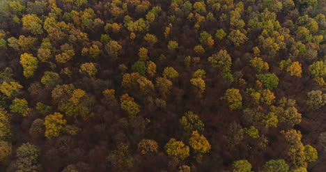 Flying-Over-Forest-Forest-From-Above-1