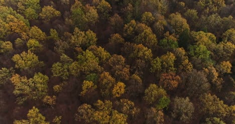 Flying-Over-Forest-Forest-From-Above-12