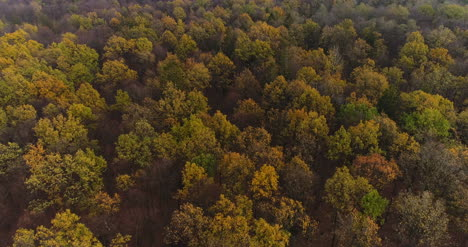 Flying-Over-Forest-Forest-From-Above-17