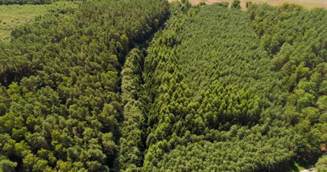 Aerial-View-Of-Forest-Woods-6