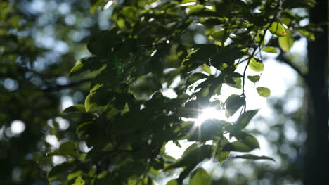 Morning-Sun-Comes-Up-Through-Leaves-At-Sunrise