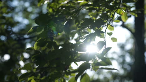 Morning-Sun-Comes-Up-Through-Leaves-At-Sunrise-1