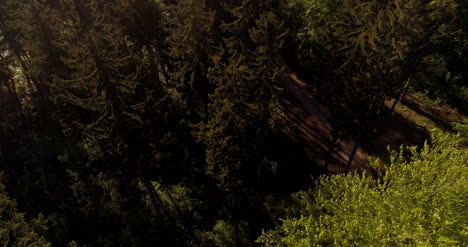 Flying-Over-Forest-Forest-From-Above-21