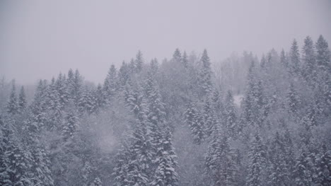 Snowflakes-Against-Snow-Covered-Trees-In-Mountains-3