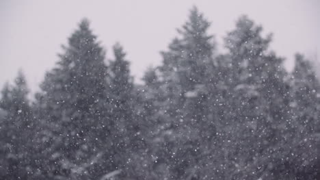 Snowflakes-Against-Snow-Covered-Trees-In-Mountains-4