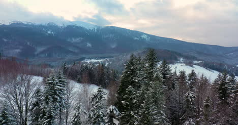 Aerial-View-Of-Forest-Covered-With-Snow-In-Mountains-10