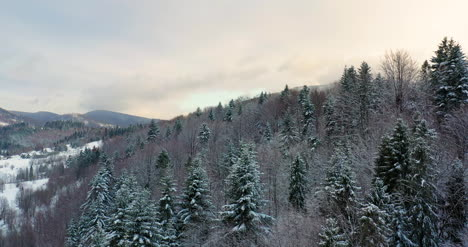 Aerial-View-Of-Forest-Covered-With-Snow-In-Mountains-11