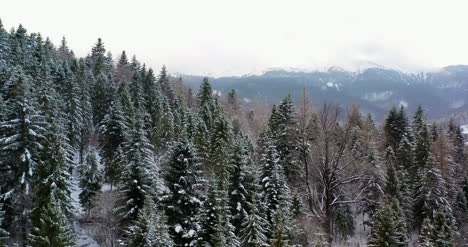 Aerial-View-Of-Forest-Covered-With-Snow-In-Mountains-2