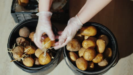 Woman-Removing-Sprouts-From-Potatoes