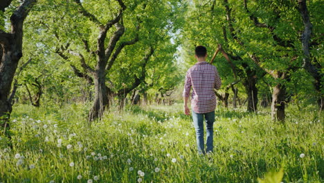 A-Young-Farmer-With-A-Hand-Braid-Walks-Through-The-Apple-Orchard-Rear-View-4K-Video