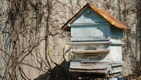 Hive-With-Bees-Bees-Actively-Fly---They-Began-To-Collect-Honey-With-The-Arrival-Of-Spring-4K-Video