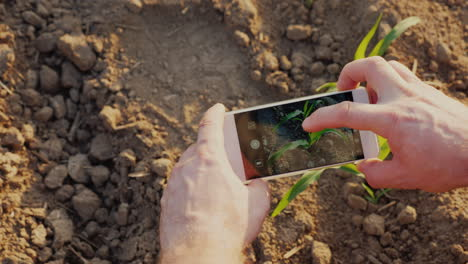Hands-Of-A-Farmer-Who-Photographs-Green-Shoots-On-The-Field-There-Is-A-Screen-With-A-Picture-Of-A-Sp