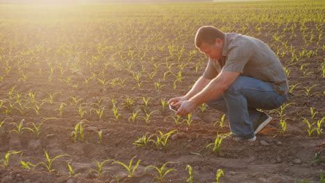 The-Farmer-Is-Doing-Research-In-The-Field-Photographs-Corn-Sprouts-With-A-Smartphone-Technology-In-A