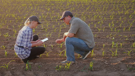 Two-Farmers---A-Man-And-A-Woman-Are-Exploring-The-Shoots-Of-Young-Corn-On-The-Field-Communicate-Use-