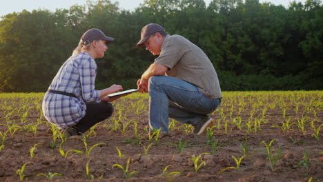 A-Man-And-A-Woman-Work-In-The-Field-They-Look-At-The-Green-Shoots-Use-The-Tablet-Against-The-Backgro