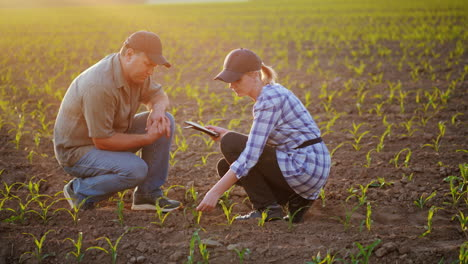 Farmers-Work-In-The-Field-They-Sit-Near-The-Green-Shoots-Of-Young-Plants-Debate-Use-The-Tablet-Beaut
