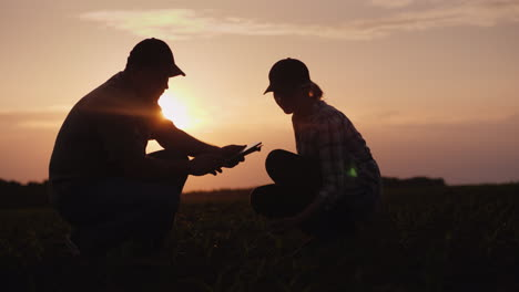 A-Family-Of-Farmers-Working-In-The-Field-In-The-Evening-At-Sunset-Sit-And-Explore-The-Young-Shoots-4