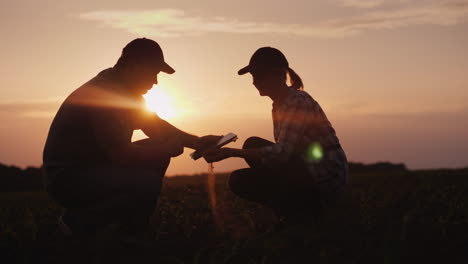 Two-Farmer-Man-And-Woman-Are-Working-In-The-Field-They-Study-Plant-Shoots-Use-A-Tablet-At-Sunset-4K-