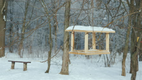 An-Empty-Bird-Feeder-In-A-Winter-Park