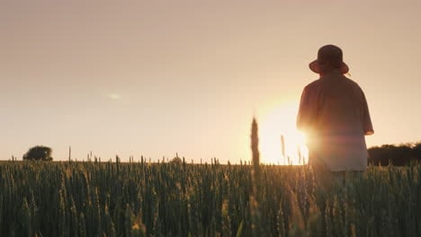 Elderly-Woman-Admiring-The-Sunset-Over-The-Wheat-Field-Rear-View-4K-Video